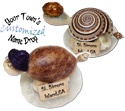 Name drop shell turtle fridge magnet on capiz shell
