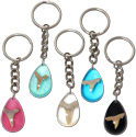 Shark tooth encased in resin key ring