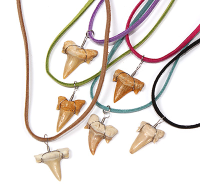 Faux suede necklace with otodus sharks tooth by Tropical Rose