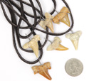 Fossilized shark teeth on suede thong
