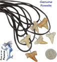 Dozens of styles of trendy and classic fossilized shark tooth necklaces and gifts