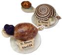 Name drop shell turtle fridge magnet on capiz shell